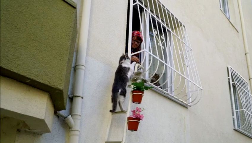 Una scala per gatti: così si aiutano i mici randagi