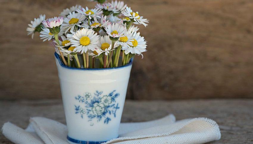 Come curare e come coltivare le margherite in vaso o in giardino
