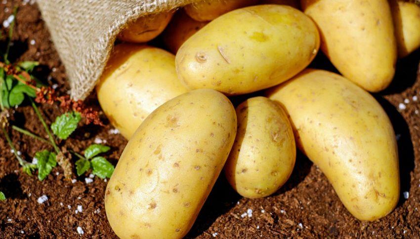 Sì, le patate possono crescere su Marte