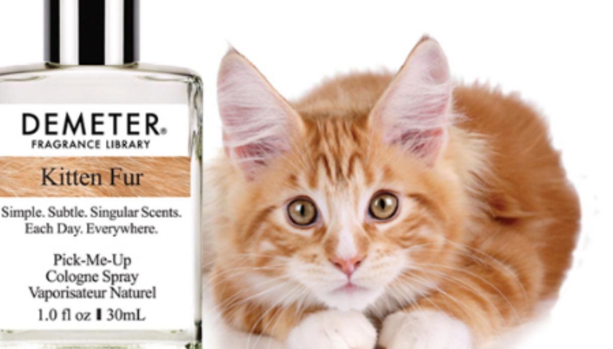 L'aroma per profumare come un gattino, in vendita ora