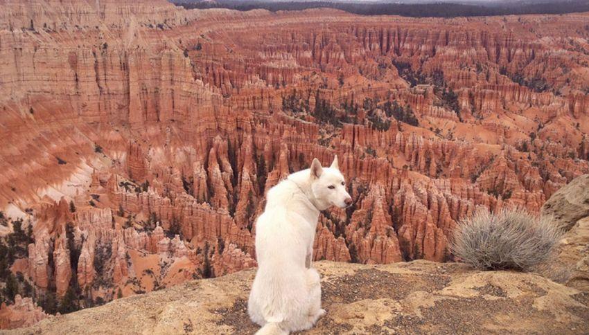 Wolf: il cane che gira il mondo è una star di Instagram