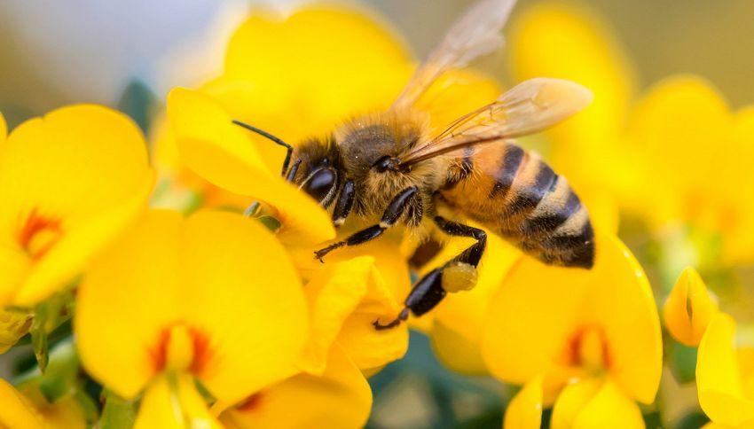 Alla scoperta delle api-droni, i minirobot che ci salveranno