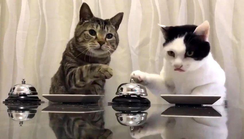 Croccantini, please: i gatti chiedono cibo suonando il campanello