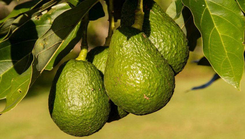 Dalle banane all'avocado, 5 cibi che migliorano l'umore