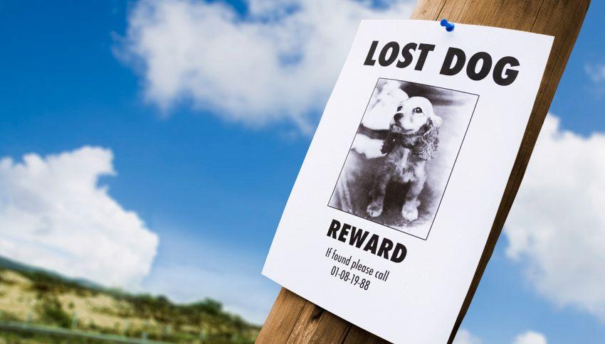 Animali domestici scomparsi? Ci pensano i pet detective