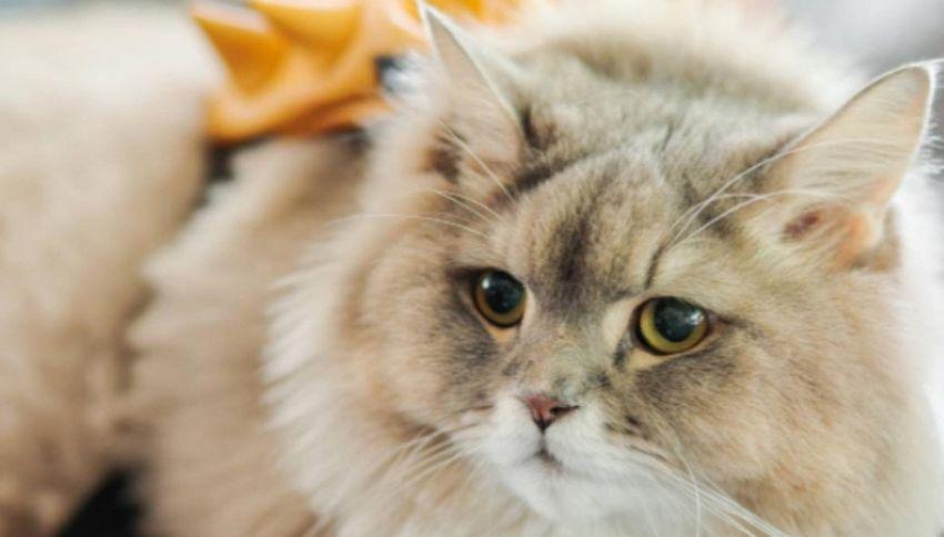 Bone Bone: il gatto con lo zainetto giallo conquista il web