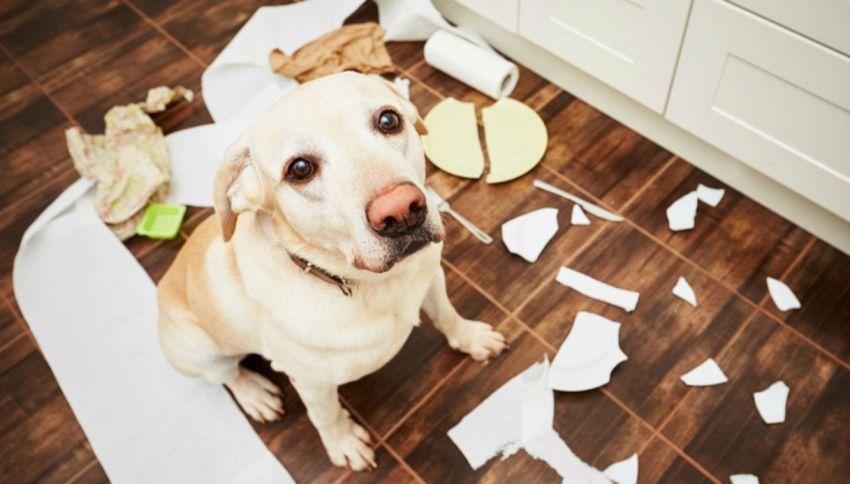 Il tuo cane si comporta in modo strano? Ecco come capire i motivi