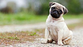 Minù: il cane rapito torna a casa dopo 3 anni