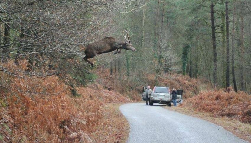 Il mistero del cervo volante: bufala o verità?