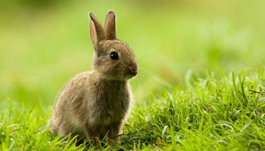 Coniglio sventa un tentativo di furto