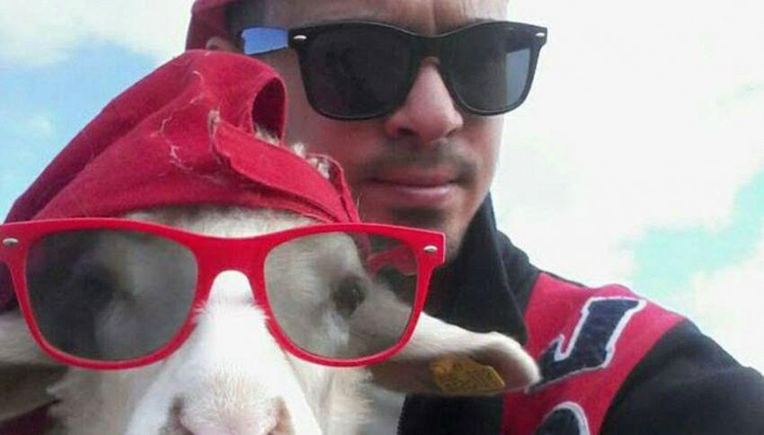 Chi è Desolina: la pecora sarda più famosa del web