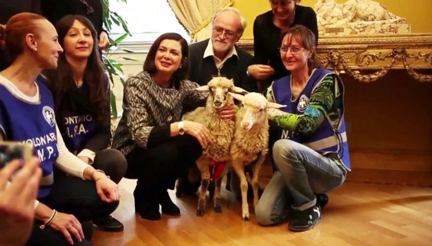 Laura Boldrini adotta due agnellini e li porta a Montecitorio