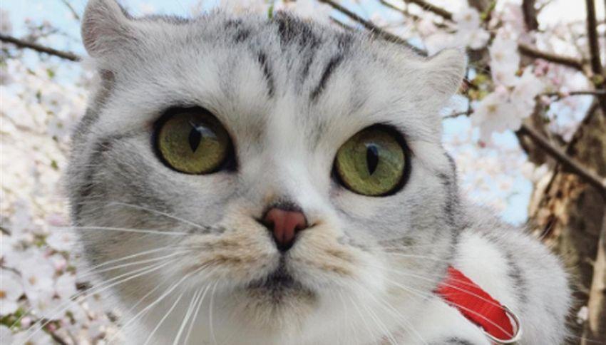 Hana, il gatto dagli occhi grandi (e 250mila followers)