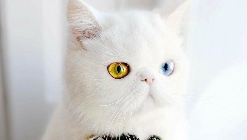 Gli occhi di Pam Pam vi ipnotizzeranno