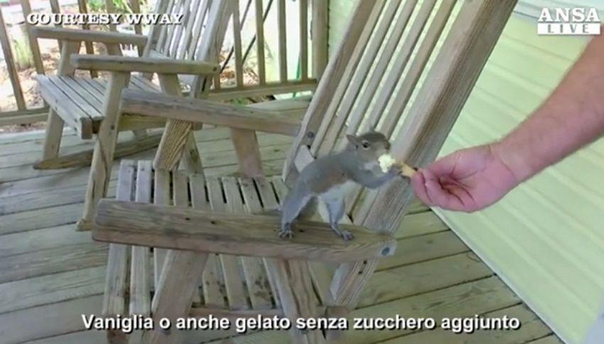 Ecco Putter, la scoiattolina che ama il gelato