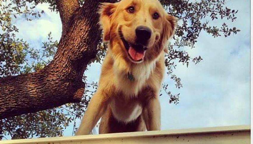 Tutti pazzi per il cane che vive sul tetto