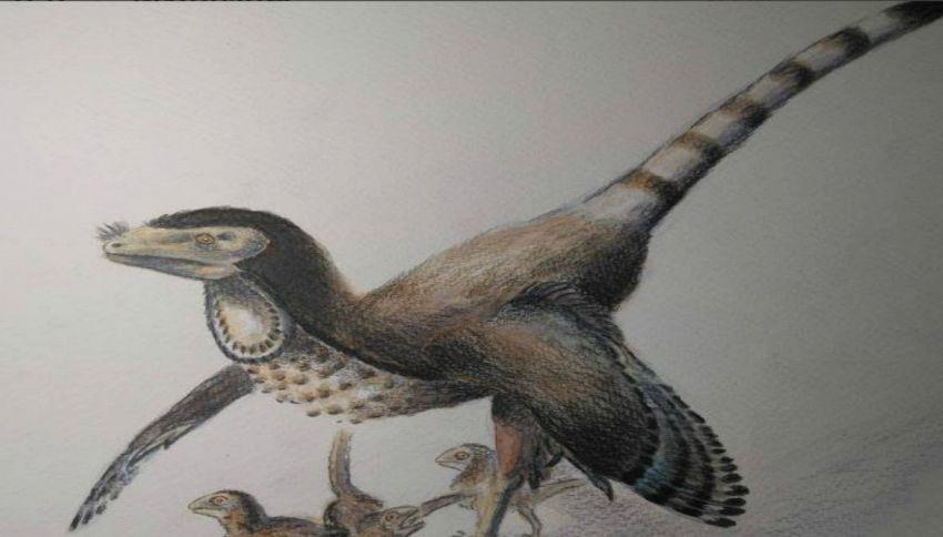Scoperto il dinosauro con le piume