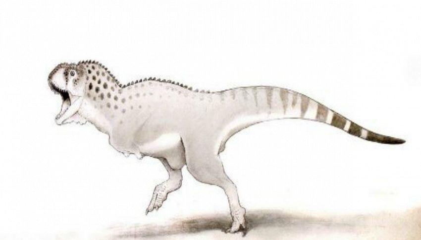 Scoperto l'ultimo dinosauro che visse 66 milioni di anni fa