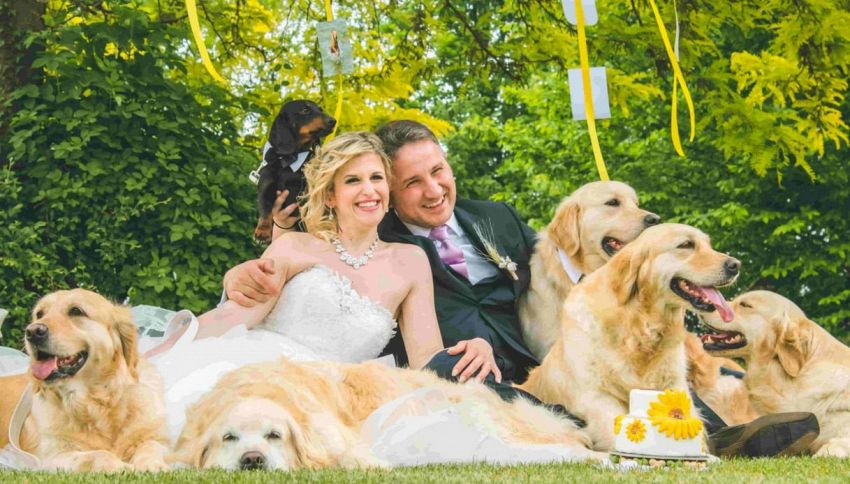 Matrimonio a 4 zampe: 12 cani ospiti alle nozze dei padroni