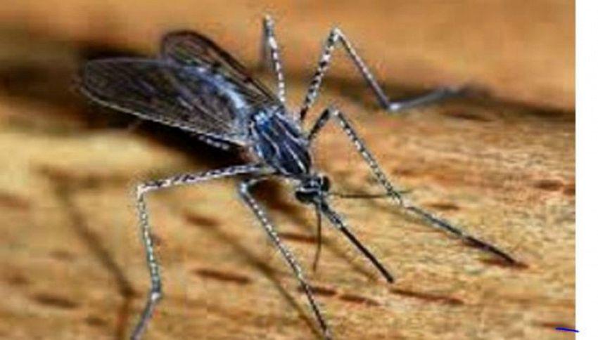 Zanzare: da cosa sono attratte, perchè pungono e come difendersi