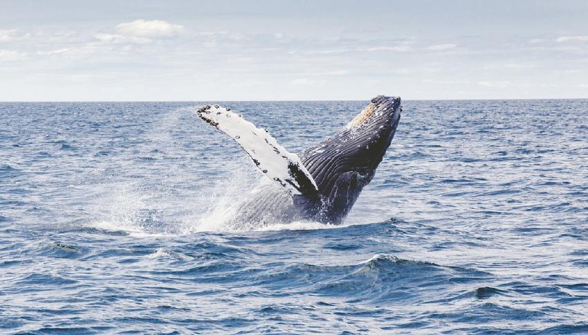 Come mai le balene sono così grandi?