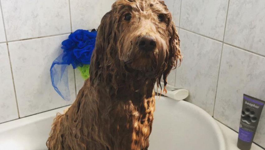 Con quale frequenza si deve lavare il cane