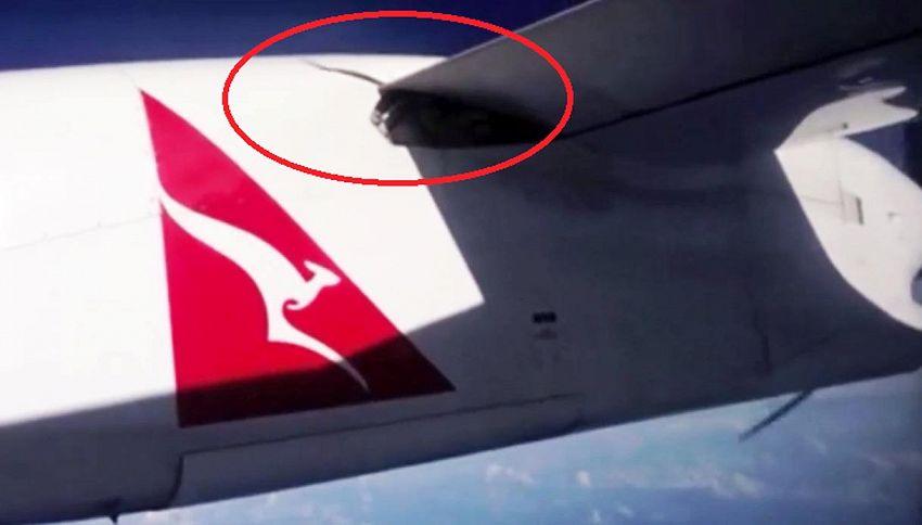 Pitone di tre metri incastrato sull'ala dell'aereo