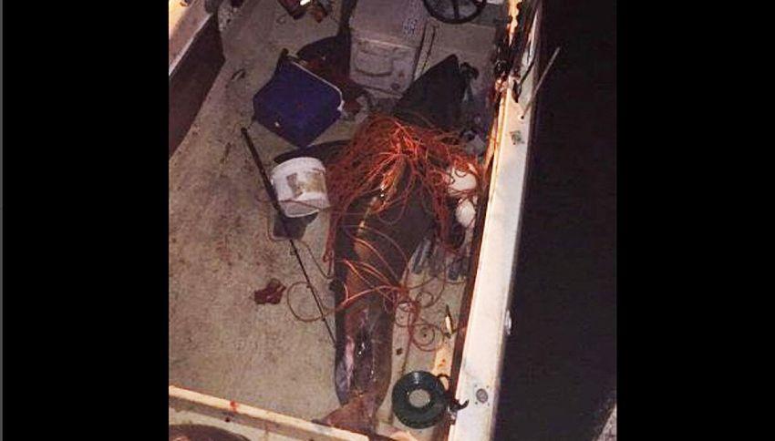 Squalo salta dentro la barca, pescatore sotto choc