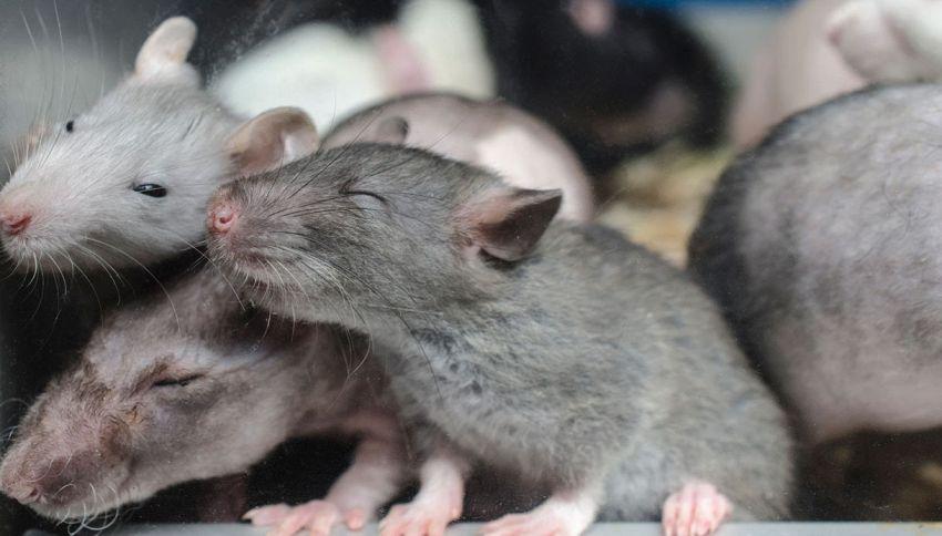 I neuroni inducono all'abbuffata: lo dice la scienza