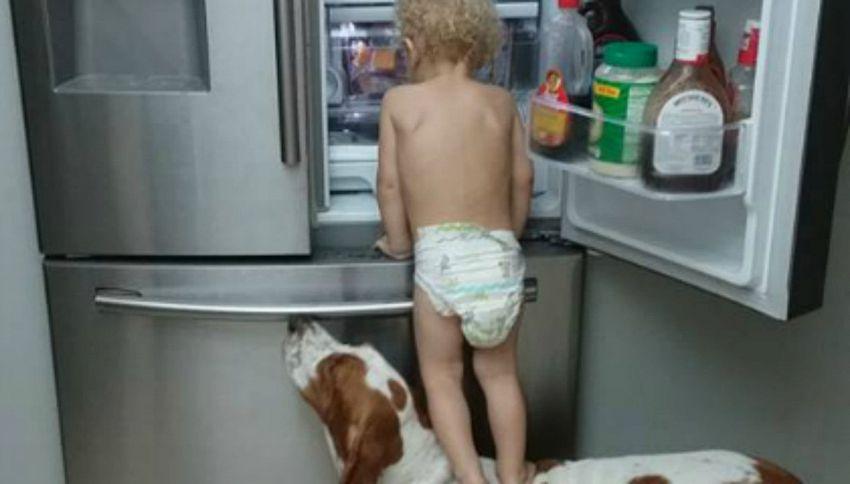 Bimbo e cane alleati per aprire il frigo, ma qualcosa va storto
