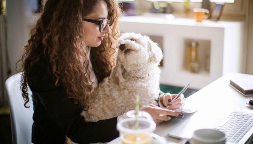 Venerdì 23 giugno potete portare il cane in ufficio: ecco perché