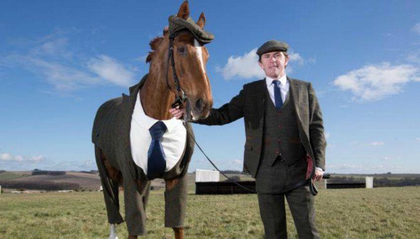 Vi presentiamo Morestead: il cavallo in giacca e cravatta