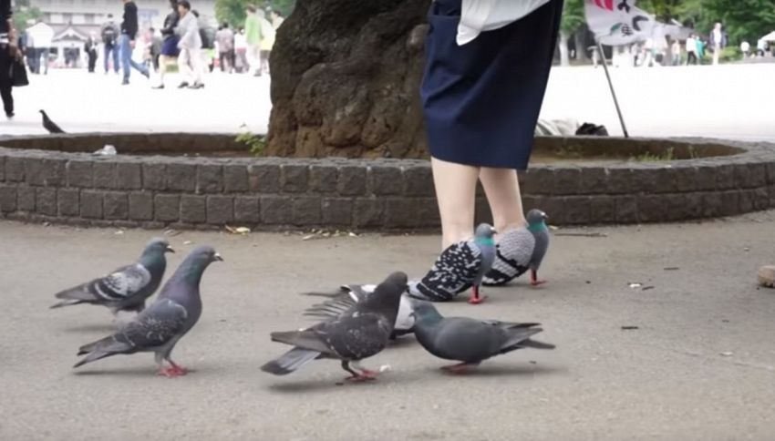 Le incredibili scarpe piccione della designer giapponese