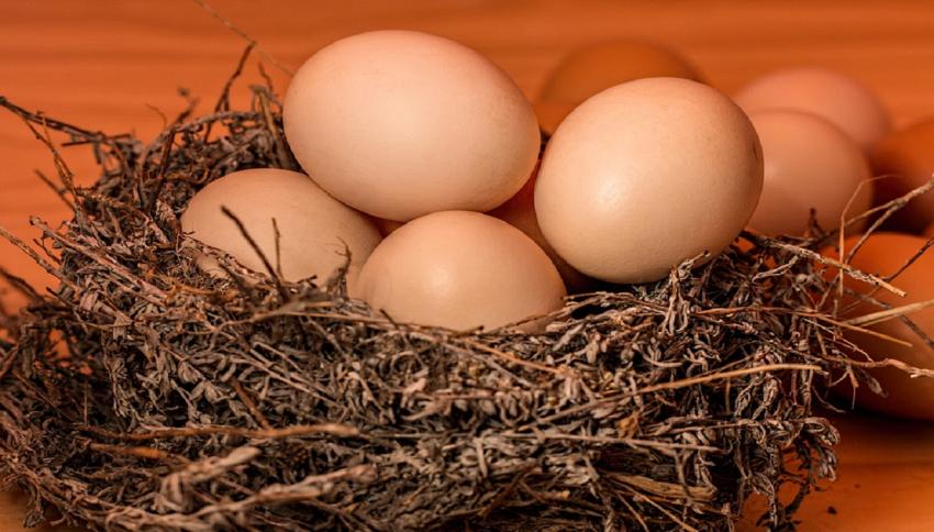 Perchè le uova hanno tale forma?