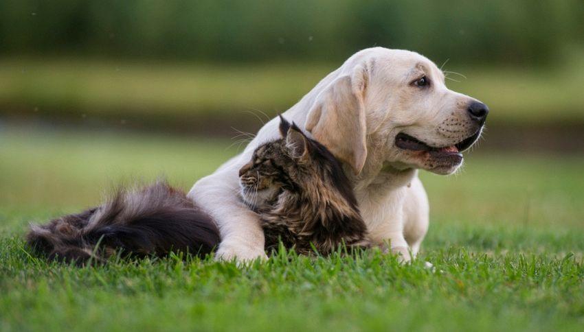 Le amicizie più strane tra animali