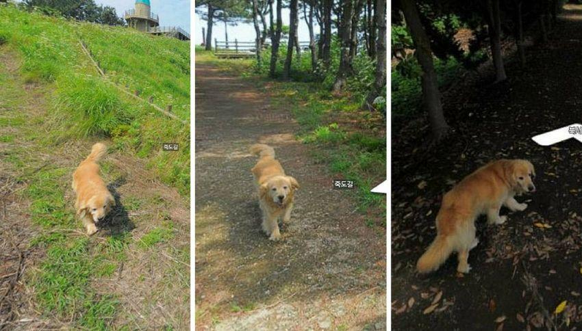 Cane segue la macchina di Street View e appare ovunque nelle foto