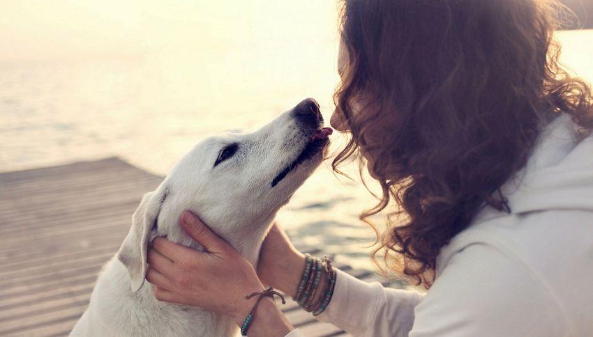 La fedeltà del cane? Tutto merito del suo DNA #lodicelascienza