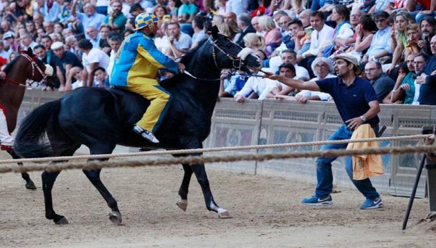 Chi è Tornasol, il cavallo che si è rifiutato di correre