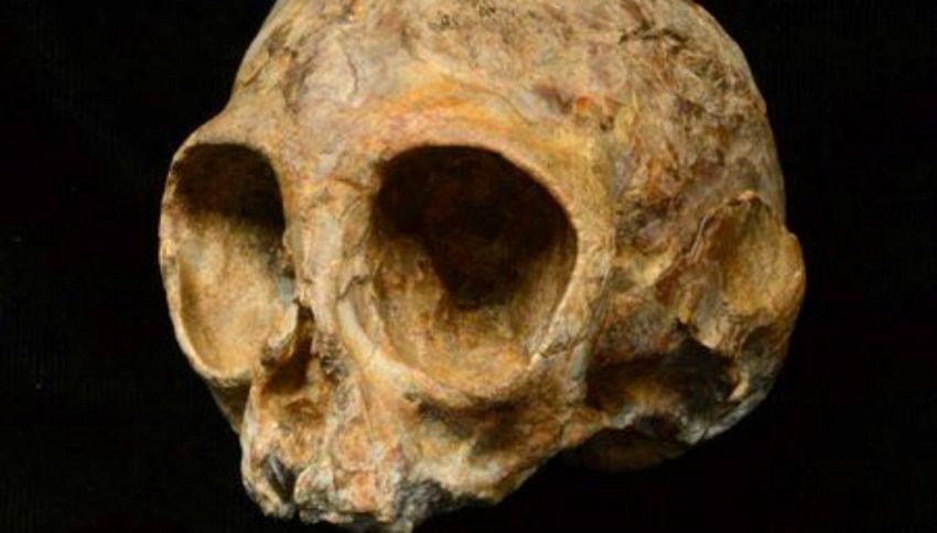 Vi presentiamo Alesi: il teschio del nostro più antico antenato