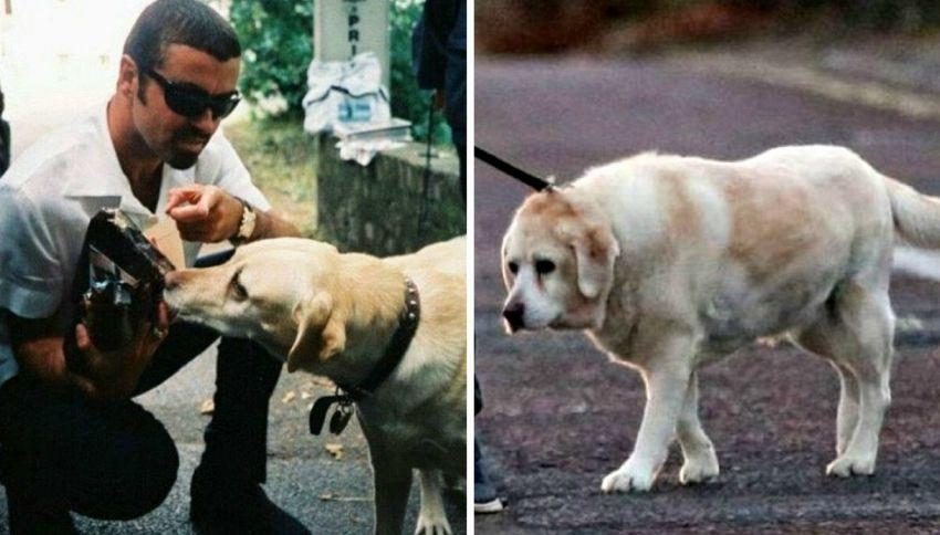 Abby, il cane di George Michael che l'aspetta sulla sua tomba