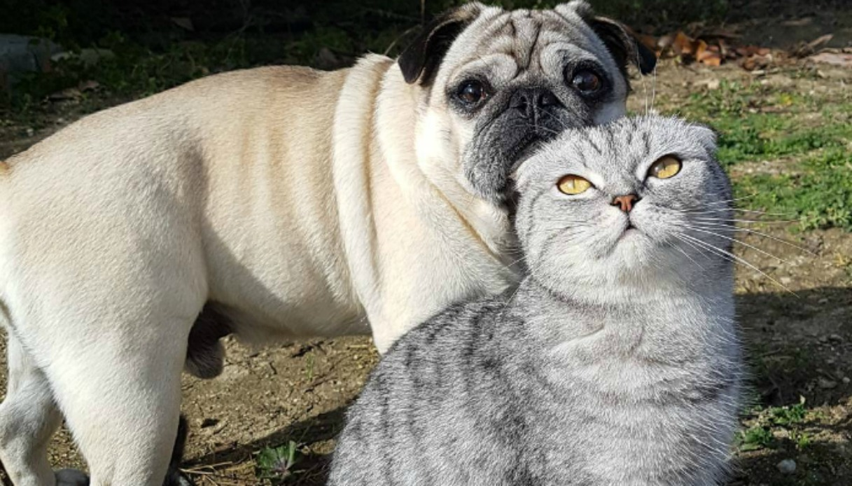 Cane e gatto affrontano insieme il Cammino di Santiago