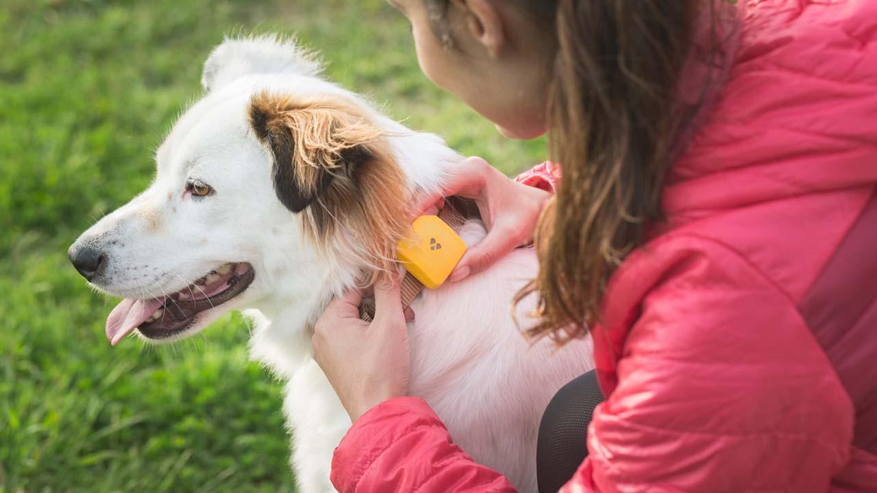 Ecco Findster Duo: il collare intelligente per il vostro cane. Foto