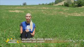 Ultimi video di Sonia Pattarino
