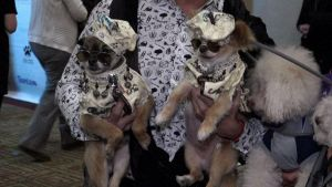 Cani vestiti da piccole star alla 'Pet fashion show' di New York