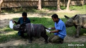 India, il baby rinoceronte salvato dai veterinari