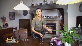 Ultimi video di Emily Schulman