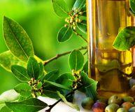 Olio d'oliva, caratteristiche e ricette