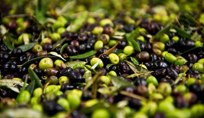 Olive, caratteristiche e ricette