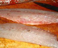 Palombo, caratteristiche e ricette