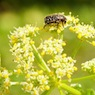 polline_news